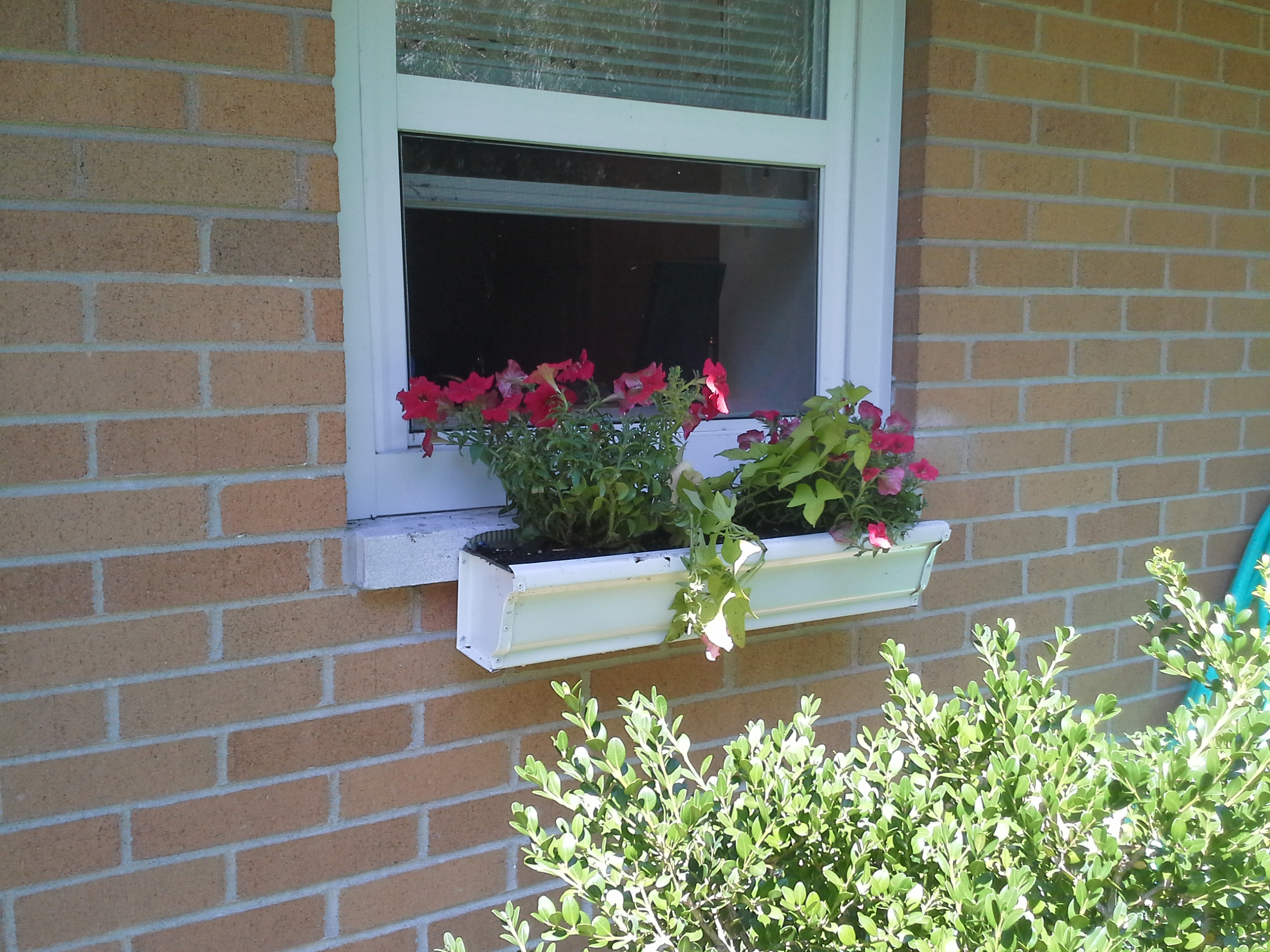 Stand Up Gardening With A Window Box On Concrete Sill