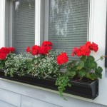 red geraniums in black windowbox