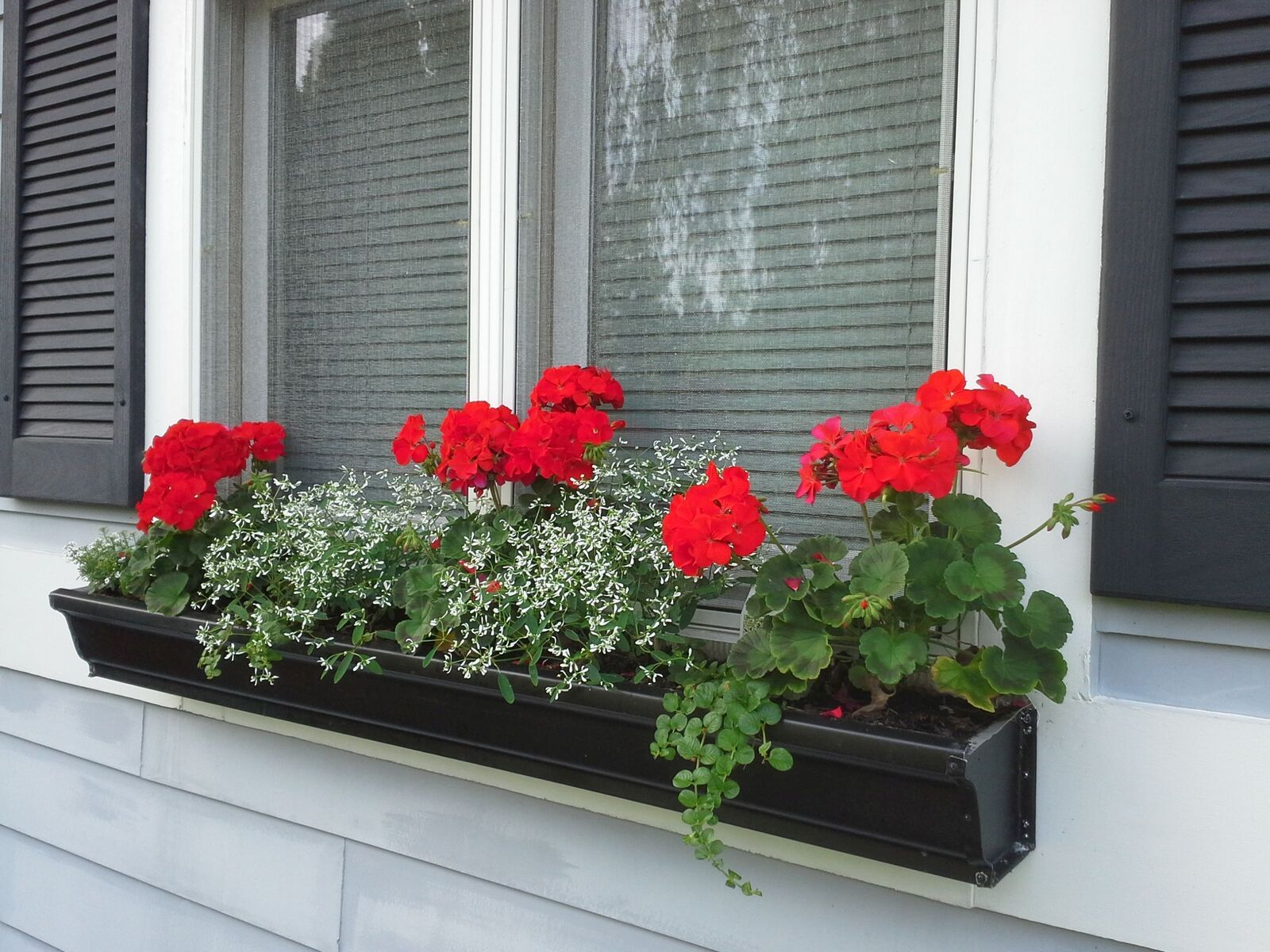 Black window box with red geraniums ans small white flowers attached ...