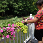 Tending flowers on the deck