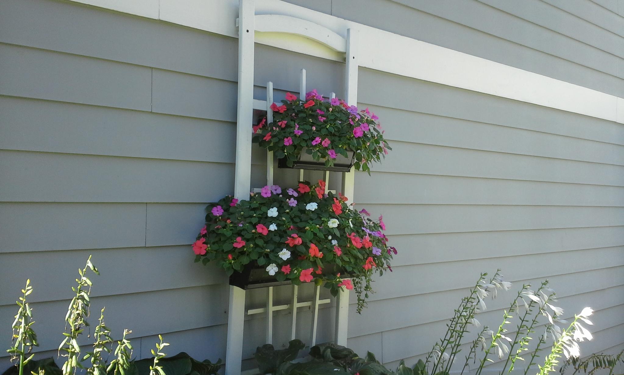 Gardening Tips Archives Gutter Gardens