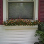 window box in white gutter planter with violas