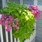 My first Gutter Garden on my deck in 2012.