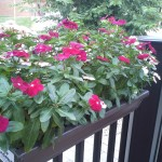 full sun planters
