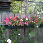 Impatiens in full shade screwed to fence