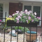 Gutter Garden planter on Wrought Iron railing