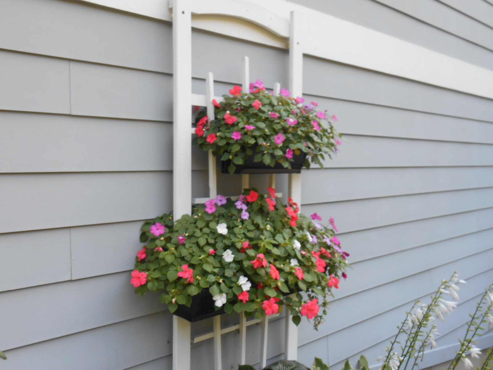 100 porch rail flower boxes balcony garden viva self watering balcony railing planter balcony - Growing petunias pots balconies porches ...