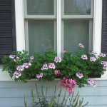 Window Box on fiber-cement board house.
