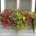 Window box with full foliage